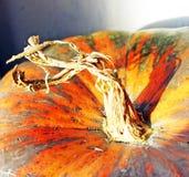 Pumpkin top. Close up of a pumpkin stem Stock Photo