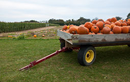 Pumpkin Tow Stock Photo