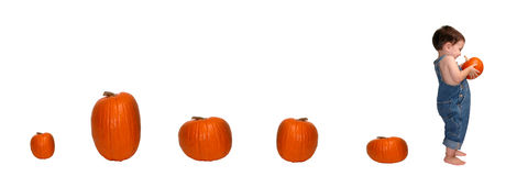 Pumpkin Trail Stock Images