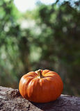 Pumpkin on a tree Royalty Free Stock Photography