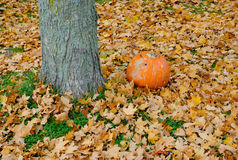 Pumpkin by a Tree Royalty Free Stock Image