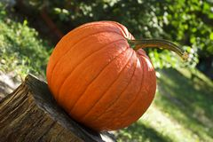 Pumpkin on tree stump Royalty Free Stock Images