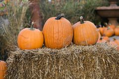 Pumpkin Trio Royalty Free Stock Image