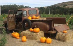 Pumpkin Truck. An old, rusty truck and pumpkins in Half Moon Bay, California Royalty Free Stock Image