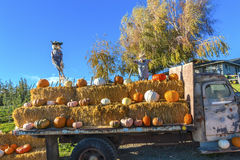 Pumpkin Truck Scarecrows White Orange Yellow Pumpkins Squash Washington Stock Photo