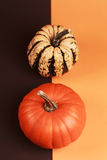 Pumpkin on two-colored background Stock Photography