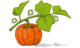 Pumpkin. Under there leaves, Additional file is transparent Background stock illustration