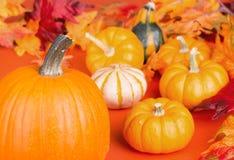 Pumpkin Up Close Stock Images