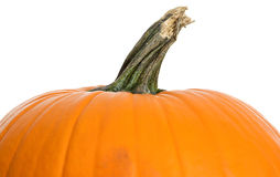 Pumpkin: Upper Half of Pumpkin on White Stock Photos