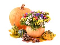 Pumpkin vase and autumn flowers for holiday. Royalty Free Stock Photo