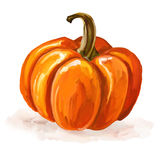 Pumpkin vector illustration  hand drawn  painted Stock Photography