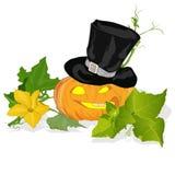 Pumpkin vector illustration Stock Image