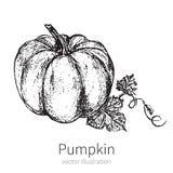 Pumpkin vector illustration isolated on white background  Stock Photo