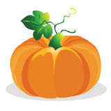 Pumpkin vector illustration. Royalty Free Stock Images