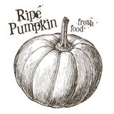 Pumpkin vector logo design template. fresh Royalty Free Stock Images