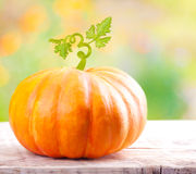 Pumpkin vegetable Stock Image