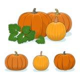 Pumpkin Vegetable, Edible Fruit Royalty Free Stock Photography