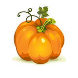 Pumpkin vegetable fruit Royalty Free Stock Image