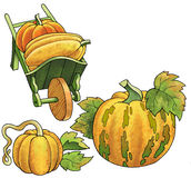 Pumpkin vegetable fruit drawing plant wheelbarrow Stock Images