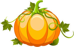 Pumpkin Vegetable Fruit Stock Photos