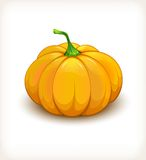 Pumpkin vegetable in a glossy style EPS10 Stock Photography