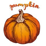 Pumpkin vegetable hand drawn vector illustration realistic sketch Royalty Free Stock Photography