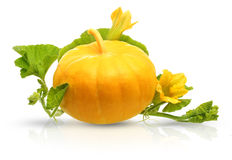 Pumpkin vegetable with leaves and flowers isolated Stock Image