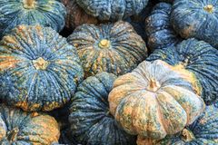 Pumpkin in vegetable market. Closeup pumpkin for health, food and agriculture concept design.  Royalty Free Stock Photo