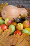 Pumpkin with vegetables, fruits and yellow leaves. Stock Photos