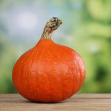 Pumpkin vegetables in summer Royalty Free Stock Photography