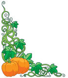 Pumpkin Vine Border. Border design with pumpkins and vines Royalty Free Stock Photo