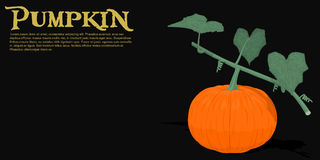 Pumpkin on vine Royalty Free Stock Image