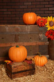 Pumpkin in vintage setting Royalty Free Stock Photo