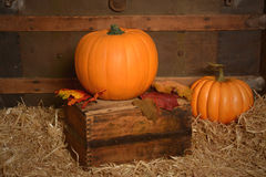 Pumpkin in vintage setting Stock Photography