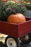 Pumpkin Wagon. Image of a red wagon with a pumpkin and a mum in it Royalty Free Stock Photo