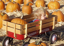 Pumpkin wagon girl stock images