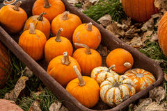 Pumpkin Wagon Royalty Free Stock Images