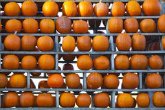 Pumpkin Wall Royalty Free Stock Image
