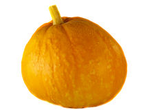 Pumpkin with water drops Royalty Free Stock Image