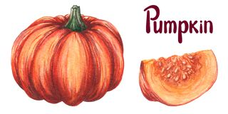 Pumpkin Watercolor Hand Draw Illustration. Orange Pumpkin Whole, Slice, Cut With Seeds. Autumn Vegetable Isolated On White Stock Photos