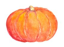 Pumpkin. Watercolor vegetable Royalty Free Stock Photography