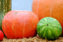 Pumpkin and watermelon Royalty Free Stock Images