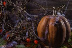 Pumpkin in the web and spiders on the background of the tree for Halloween stock photos