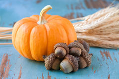 Pumpkin with wheat Royalty Free Stock Photo
