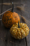 Pumpkin and wheat decoration Stock Photography