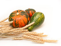 Pumpkin and wheat Royalty Free Stock Images