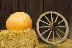 Pumpkin and the Wheel. Stock Image