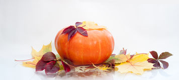Pumpkin   on white. A pumpkin   on white, autumn background Stock Photography