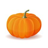 Pumpkin  on white. Stock Images