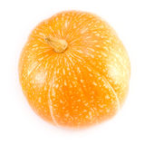 Pumpkin on a white background. Orange pumpkin on a white background horizontal picture Stock Image